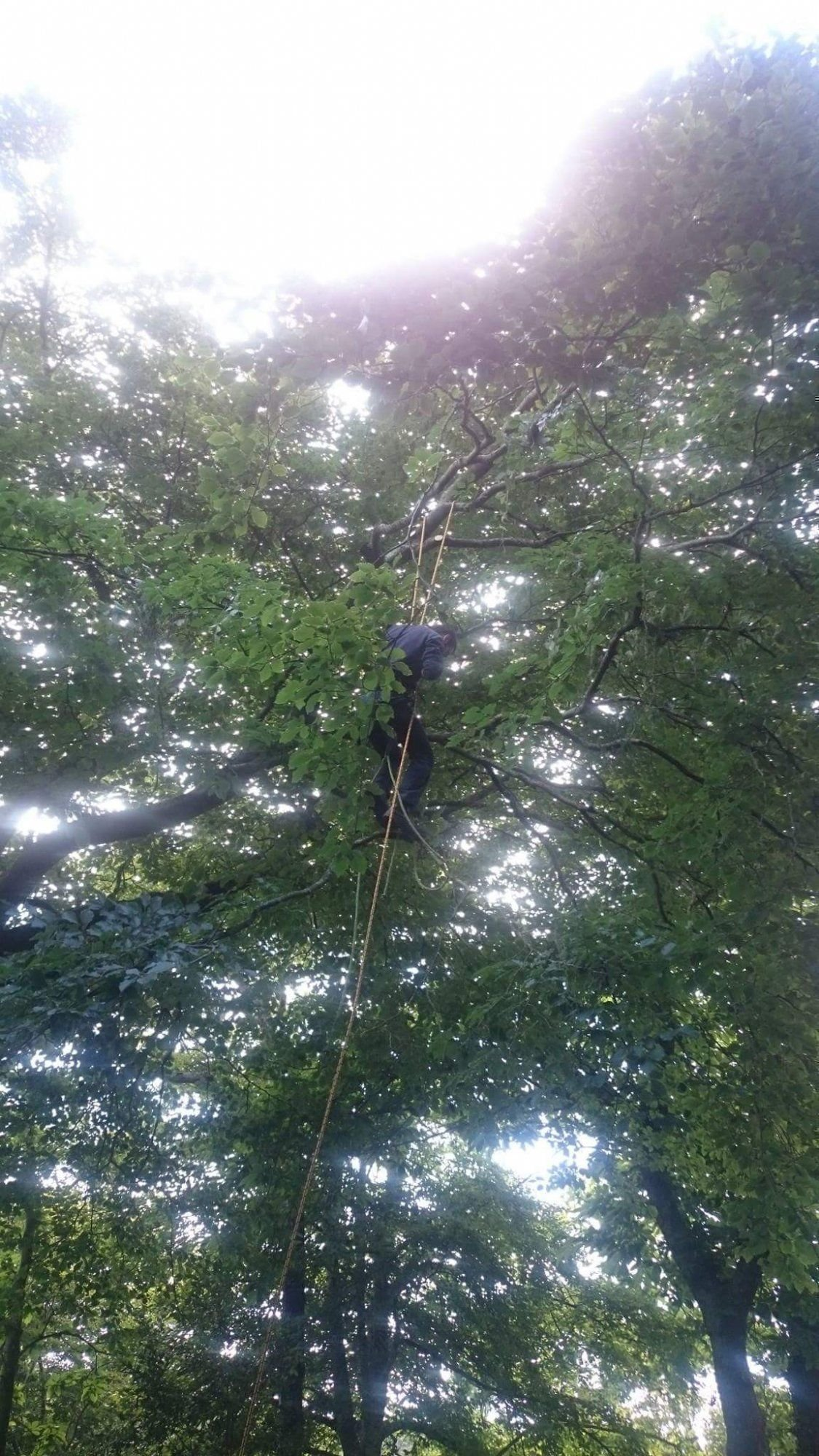 Tree surgery services in Salcombe and South Hams